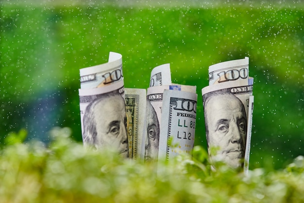 American dollar banknote on natural green background.