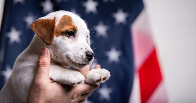 Американская концепция дня независимости, милый щенок джек рассел терьер в мужских руках позирует перед флагом сша