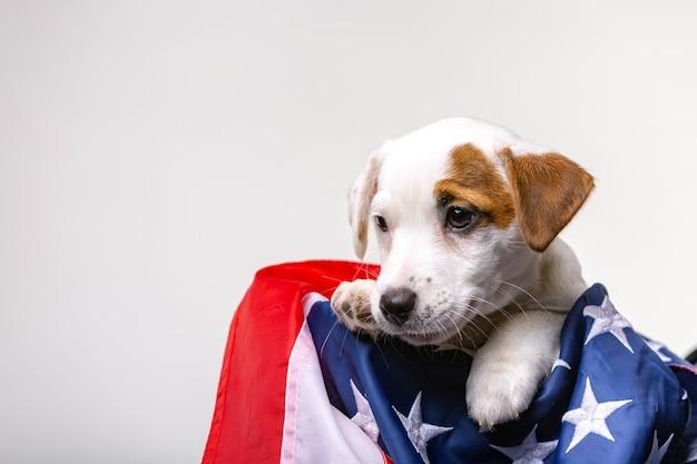Американский день независимости, милый щенок джек рассел терьер поза с флагом сша