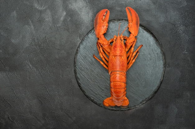 American lobster on a black background.