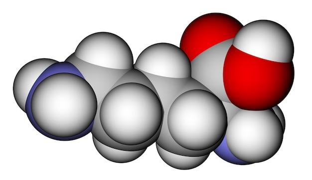 아미노산 라이신 공간 채우기 분자 모델