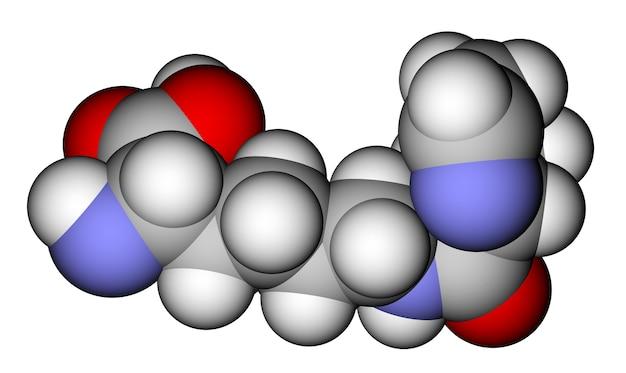 아미노산 피 롤리 신 공간 충전 분자 모델