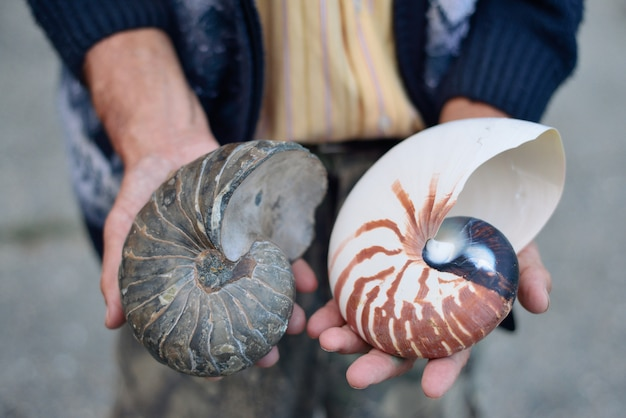 Ammonite ancient archaeologist in the hands of the scientist, the concept of the history of the prehistoric era