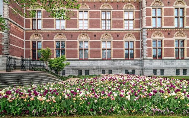 암스테르담 네덜란드 국립 박물관 벽 앞의 화려한 튤립