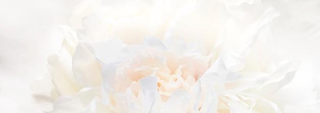 봄이나 여름을 위한 부드러운 스타일의 파스텔 색상의 섬세한 꽃의 추상적인 꽃 배경. 복사 공간 배너 배경입니다. 선택적 소프트 포커스, 소프트 몽환적인 룩