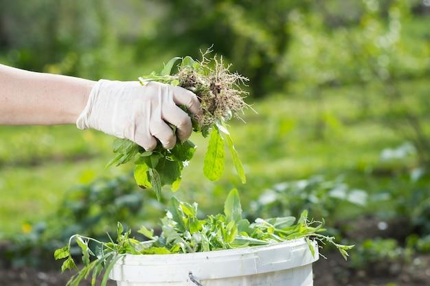 雑草や残り物を白いゴミ箱にリサイクルするアクティブな年配の女性/女性/女の子。エコロジー