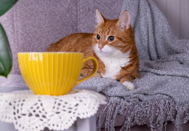 Взрослая рыжая кошка в уютной домашней атмосфере хюгге.