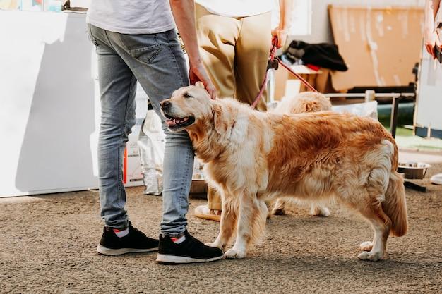 大人のゴールデンレトリバーが飼い主の足に寄り添います。幸せな愛情のこもったペット。都市公園での犬の日