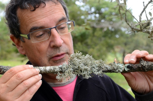 Взрослый мужчина замечает на ветке несколько лишайников. лишайники указывают на загрязнение воздуха