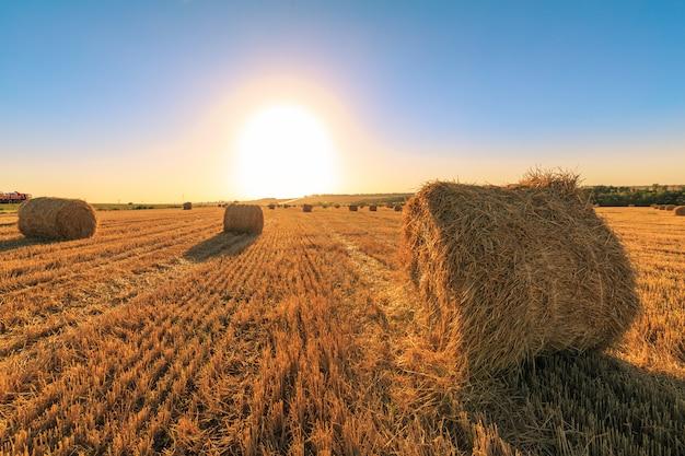 日没時の農業分野