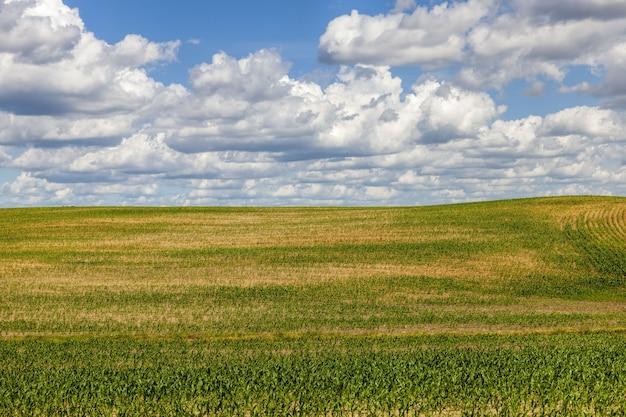 곡물, 밀 또는 호밀을 재배하는 농업 분야, 동부 유럽의 농업 활동