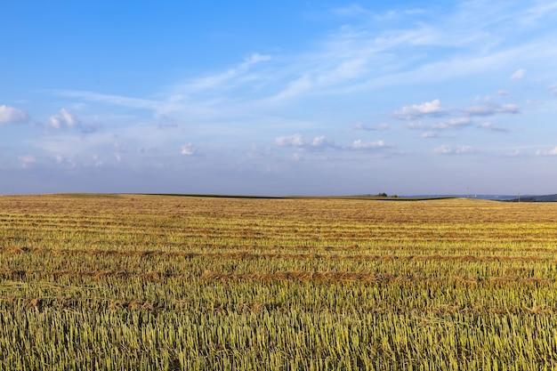 穀物が収穫される農地