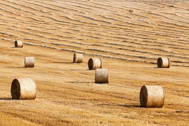 Сельскохозяйственное поле, на котором лежат соломенные стога сена после сбора урожая