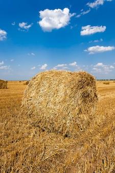 Сельскохозяйственное поле, где в штабель собирают урожай зерновых и солому.