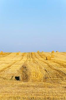 収穫した穀物とわらが積み重なって集まった農地。