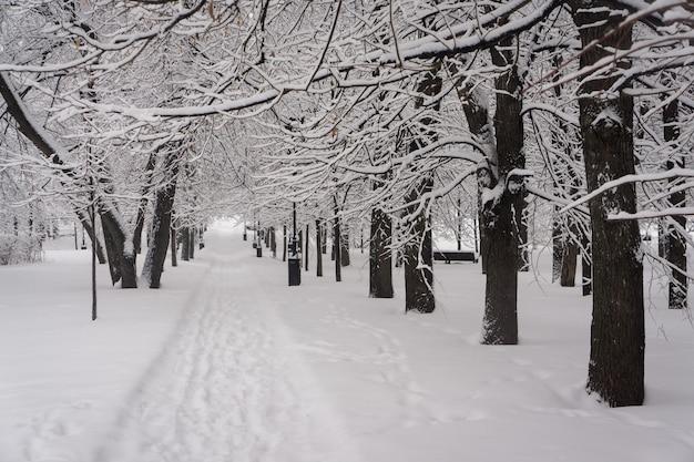 두꺼운 눈으로 덮인 겨울 공원의 골목