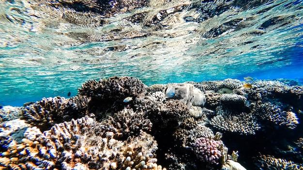산호와 열대어가 헤엄치는 바다의 바닥에서 수면까지의 놀라운 바다 전망.