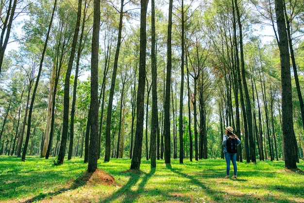 帽子とバックパックが後ろに立って、美しい松林の中を見てアジアの女性旅行者