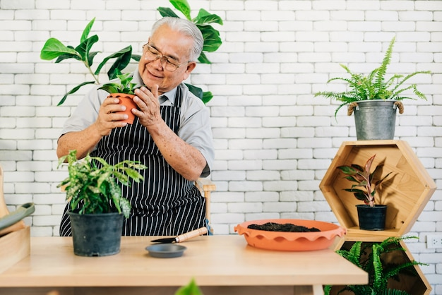 アジアの引退した祖父は、植物の世話をするのが大好きで、幸せな引退活動で植物を鉢に入れています。