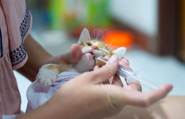 アジアの女性が病気の猫に薬を与えています。