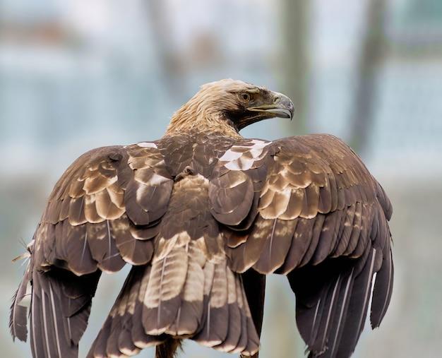 Орел в зоопарке