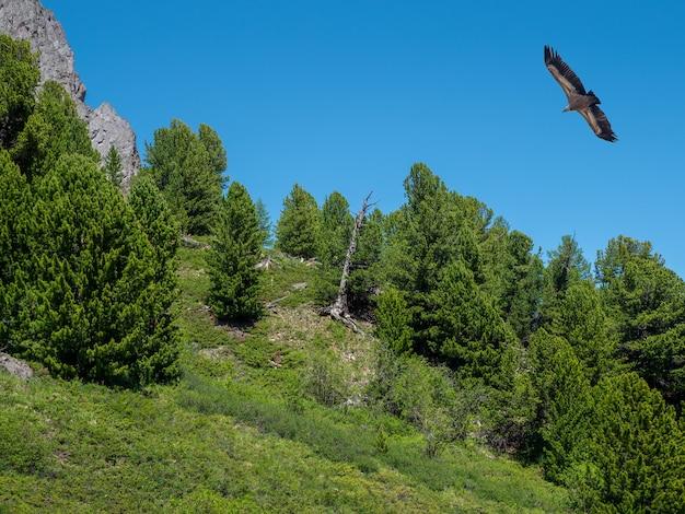 森の上のワシ。山の樹木が茂った斜面と木の上の猛禽類。
