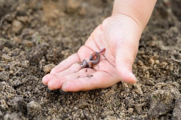 Дождевой червь в руках ребенка весной в саду