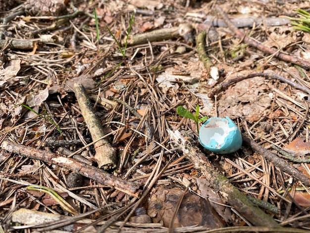 Яичная скорлупа синего цвета лежит на земле в лесу