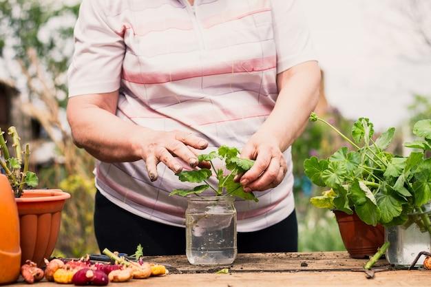 Пожилая кавказская женщина срезает ножницами зеленый молодой цветок, чтобы пересадить его в коричневый цветочный горшок.
