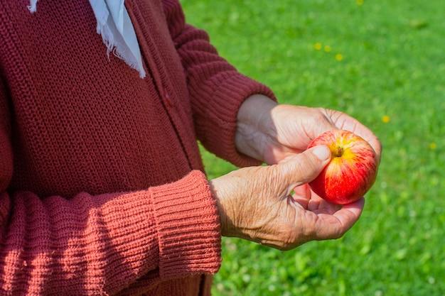 나이든 손은 빨간 신선한 사과를 들고 있습니다. 건강 식품 개념을 수확.