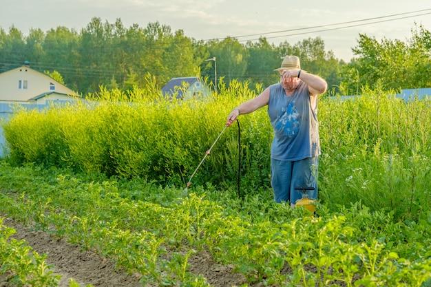 Пожилой мужчина в шляпе распыляет инсектицид на ботву картофеля