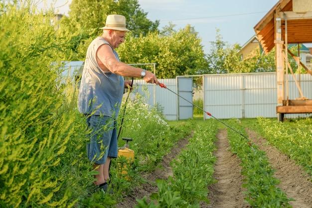 Пожилой мужчина в шляпе распыляет инсектицид на ботву картофеля Premium Фотографии