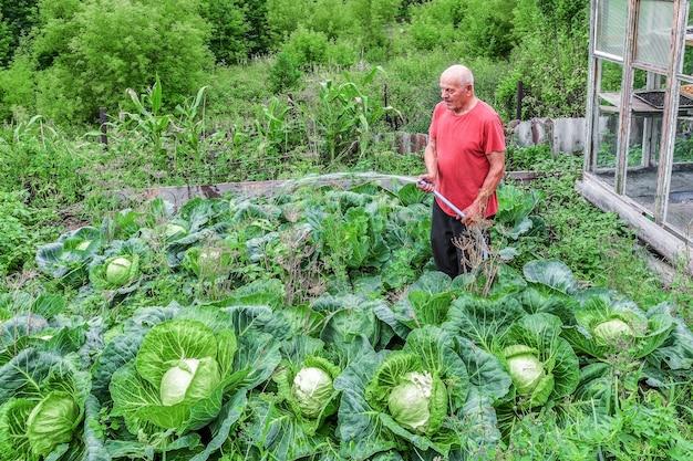 Пожилой мужчина поливает огороды в своем саду в летний день