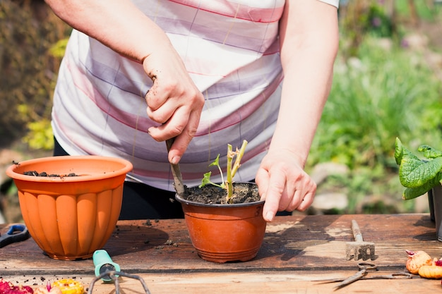 Пожилая женщина кавказской национальности в легкой одежде на природе пересаживает молодое зеленое растение в цветочный коричневый горшок