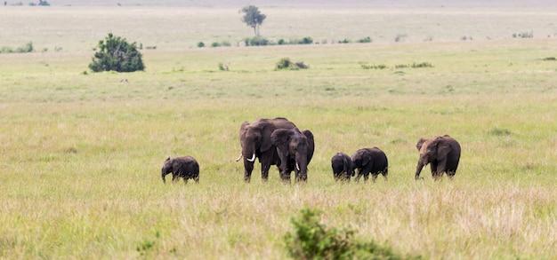 Семья слонов на пути через кенийскую саванну