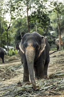 Слон гуляет в джунглях.