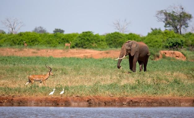 ケニアのサバンナの滝壺にいる象