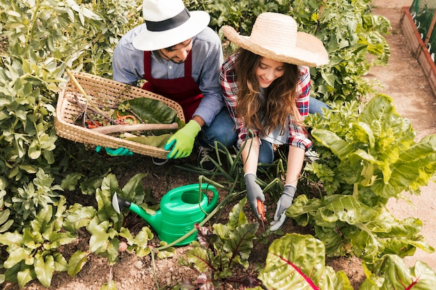 庭で働く男性と女性の庭師の上から見た図