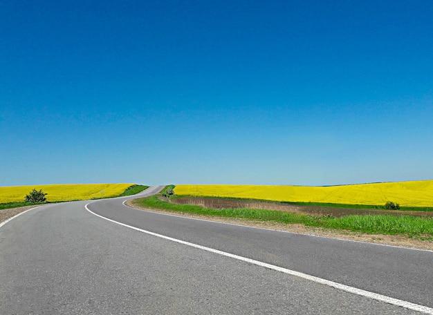 유채 밭 근처에 빈 아스팔트 도로가 구부러져 있습니다. 하늘은 밝은 파란색