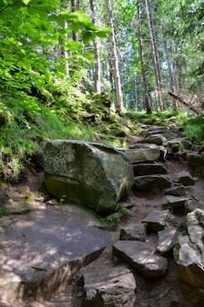 Пустая каменная лестница в летнем лесу для подъема на холм или гору.