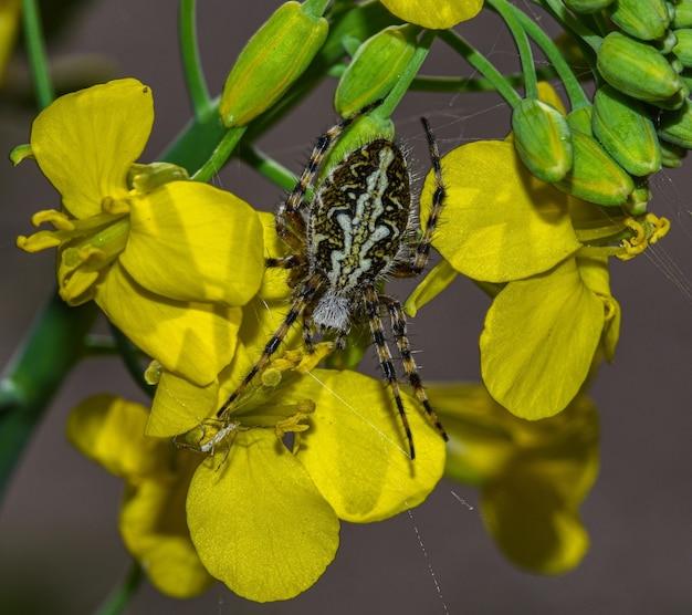 노란 꽃에 곤충