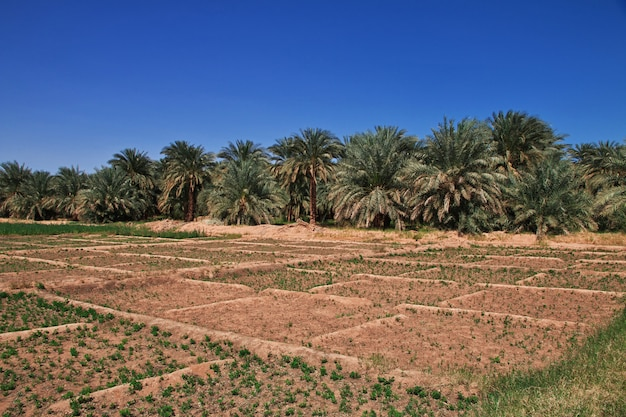 Оазис в пустыне сахара, африка