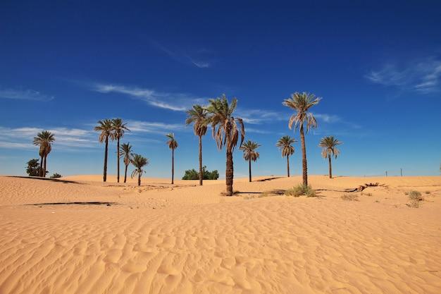 アフリカの中心にあるサハラ砂漠のオアシス