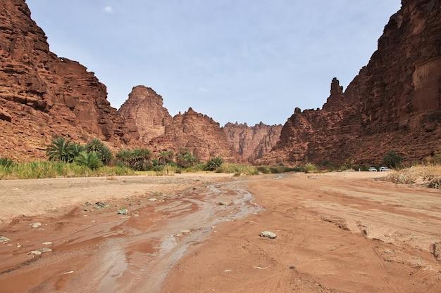 サウジアラビアのワディディサアルシャク峡谷のオアシス