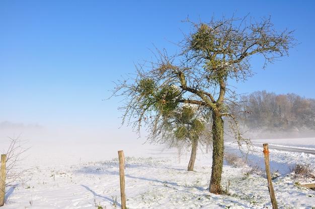 Старая яблоня в заснеженном пейзаже в прекрасный зимний день