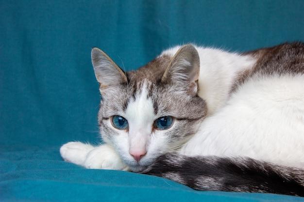 На кровати отдыхает старый кот голубые кошачьи глаза кот засыпает
