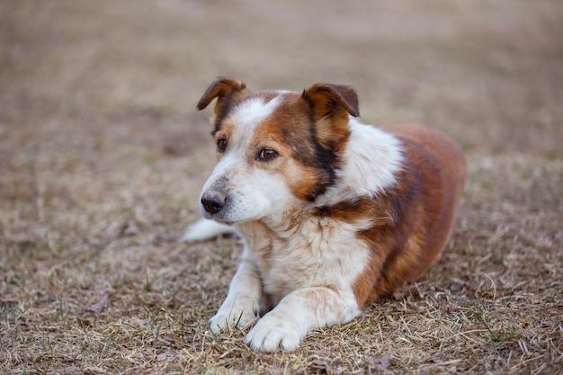 주인을 기다리는 땅에 누워있는 오래된 슬픈 잡종 개