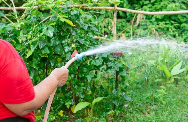 Старая женщина, о которой мы не могли знать, поливала растения на заднем дворе очень сильной водой.
