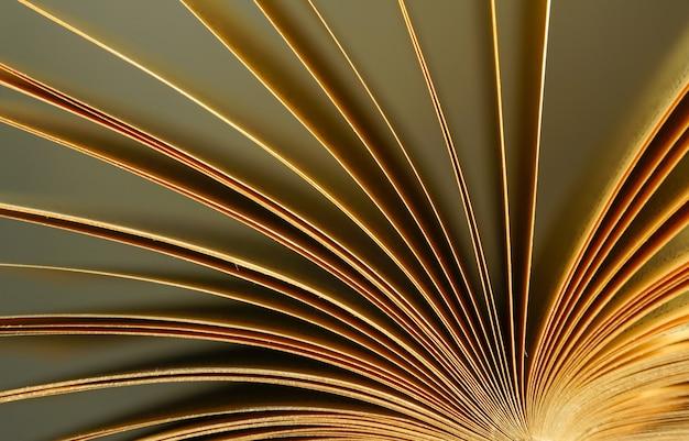 햇빛에 펼쳐진 책