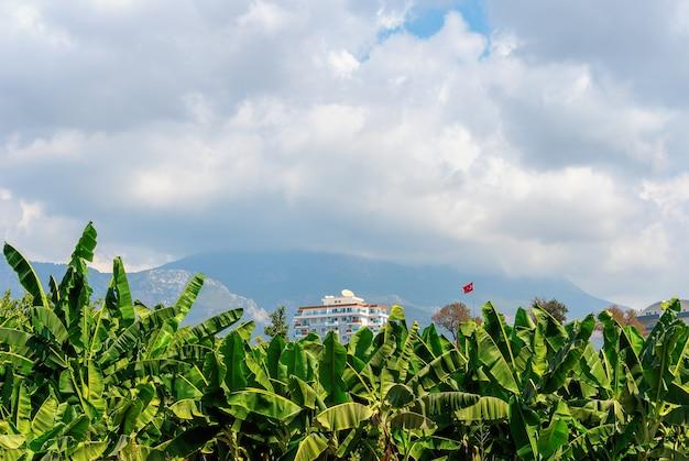 Многоквартирный дом на открытом воздухе в полдень, в окружении банановых деревьев и развевающегося турецкого флага.